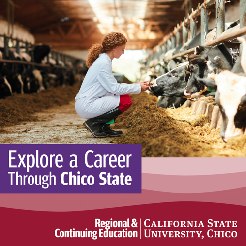 Explore a Career as a Veterinary Assistant Through Chico State