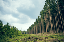 Forestry Industry Professionals Utilize Geospatial Mapping Technologies