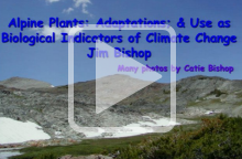 Alpine Plants: Their Adaptations and Use as Biological Indicators of Climate Change