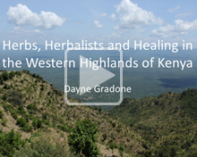 Decorative Use: Image of Herbs, Herbalists and Healing in the Western highlands of Kenya Presentation