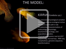 The Genomics of Physiological Resilience in Killifish