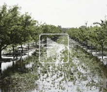 decorative use only: image from sustainable water presentation