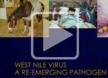 One Health: Understanding and Addressing Emerging Infectious Diseases
