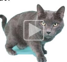 Pet Ownership 101