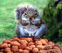 Video Image: The Story of the Squirrel Who Gathered Too Many Nuts