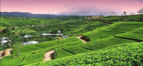 Nepal Terraced Fields