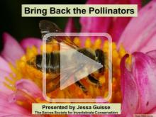Pollinators thumbnail