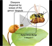 Diaspore Dispersal
