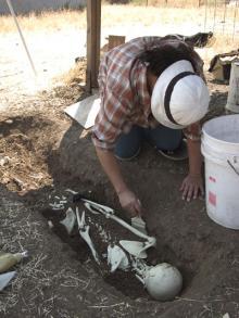 Excavating the skeleton