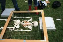 Mapping the skeleton