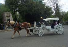 Horse drawn carriage in Oldtown Sacramento
